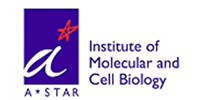 Institute of Molecular and Cell Biology, A*STAR